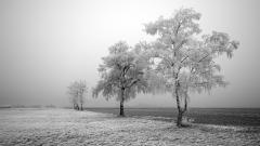 Frosty Wallpaper 36009