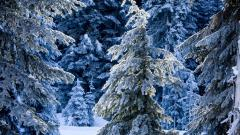 Gorgeous Frosty Wallpaper 36016