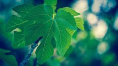 Green Macro Wallpapers 37262