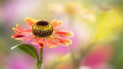Hazy Flower 41013
