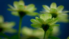 Lovely Green Macro Wallpaper 37263