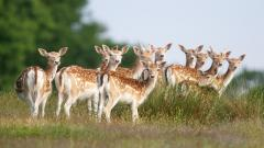 Lovely Herd Wallpaper 42795