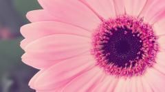 Pink Flower 19310