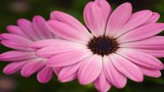 Pink Flower 19323