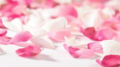 Pink Flower Pedals 19309