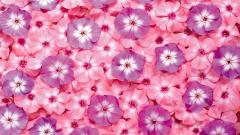 Pink Flowers 19322