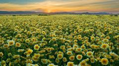 Pretty Flower Field Wallpaper 42767