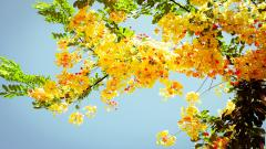 Pretty Summer Screensavers 21535