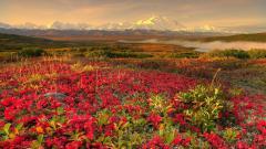 Spring Landscape Screensavers 21557