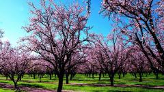 Spring Screensavers 21554