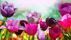 Spring Screensavers HD 21552