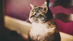 Stunning Cat Look Wallpaper 44163