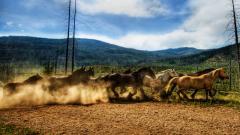 Stunning Herd Wallpaper 42797