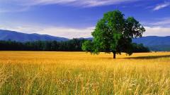 Stunning Landscape 29031