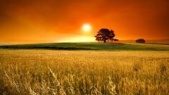 Stunning Landscape Background 29029