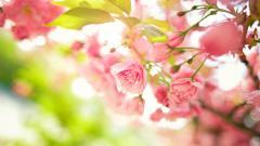 Stunning Pink Flowers 19317