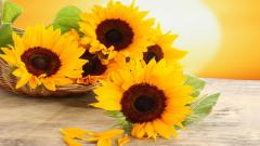 Sunflower Images 21591