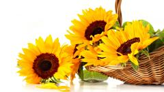 Sunflowers 21585