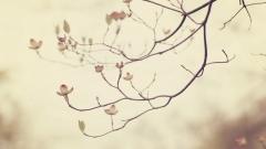 Tree Branch Wallpaper 44188