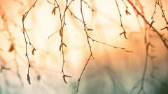 Tree Branch Wallpaper 44192