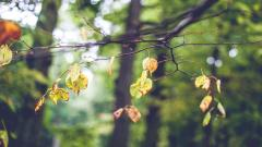 Tree Branch Wallpaper HD 44186