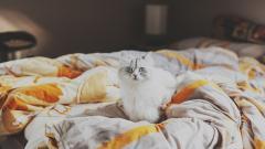 White Cat Look Wallpaper 44155