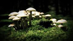 White Mushroom Wallpaper 27512