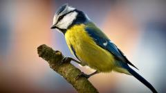 Wonderful Bird Up Close Wallpaper 43158