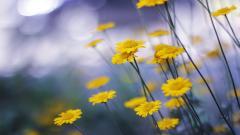 Yellow Macro Background 37397