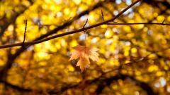 Yellow Macro Pictures 37404