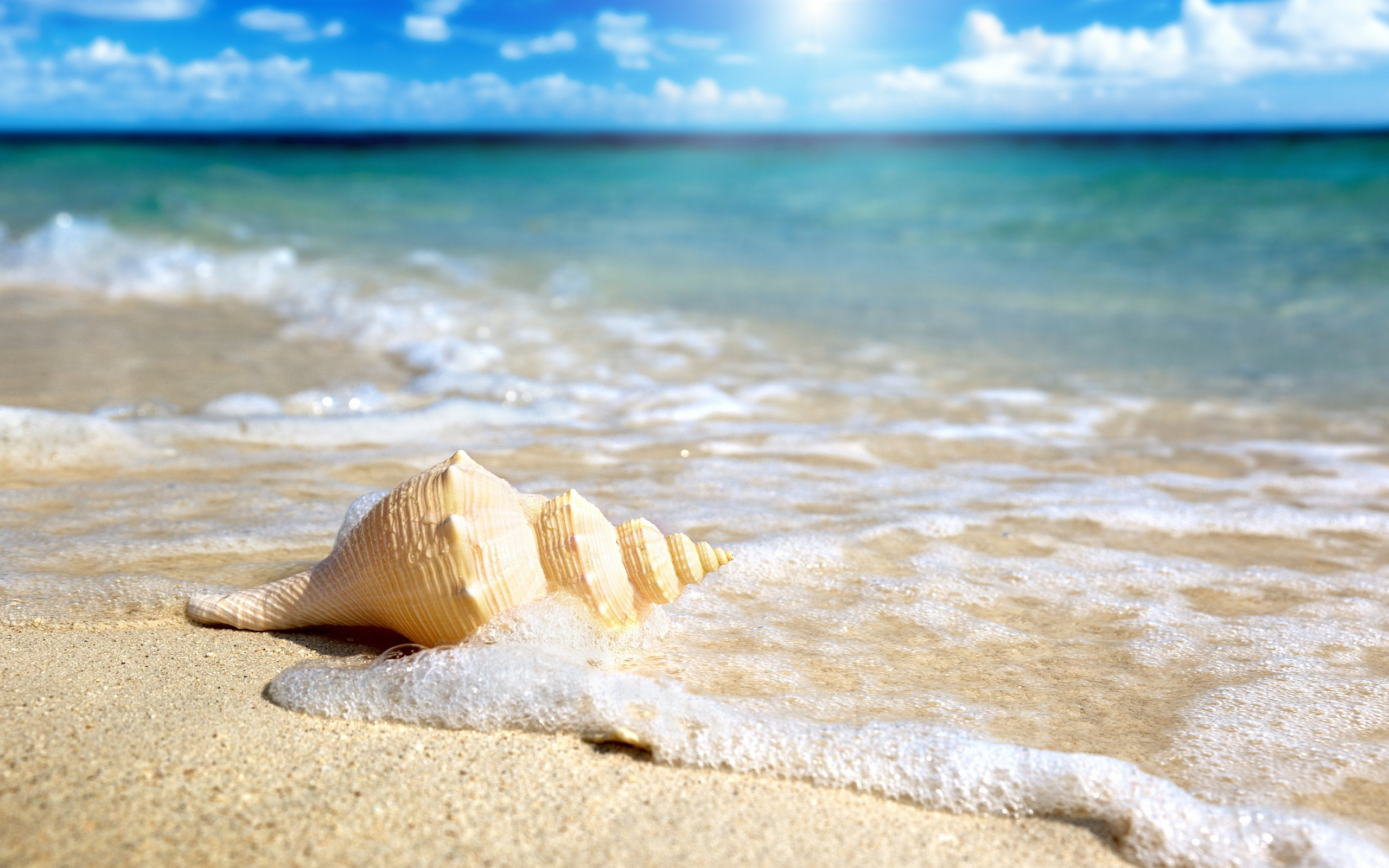 wonderful beach shell wallpaper 41192
