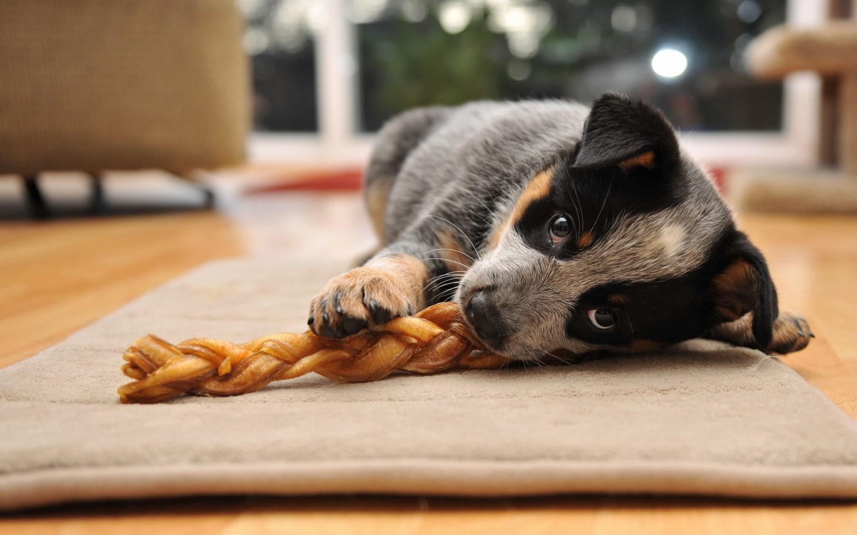 wonderful dog friend wallpaper 44564