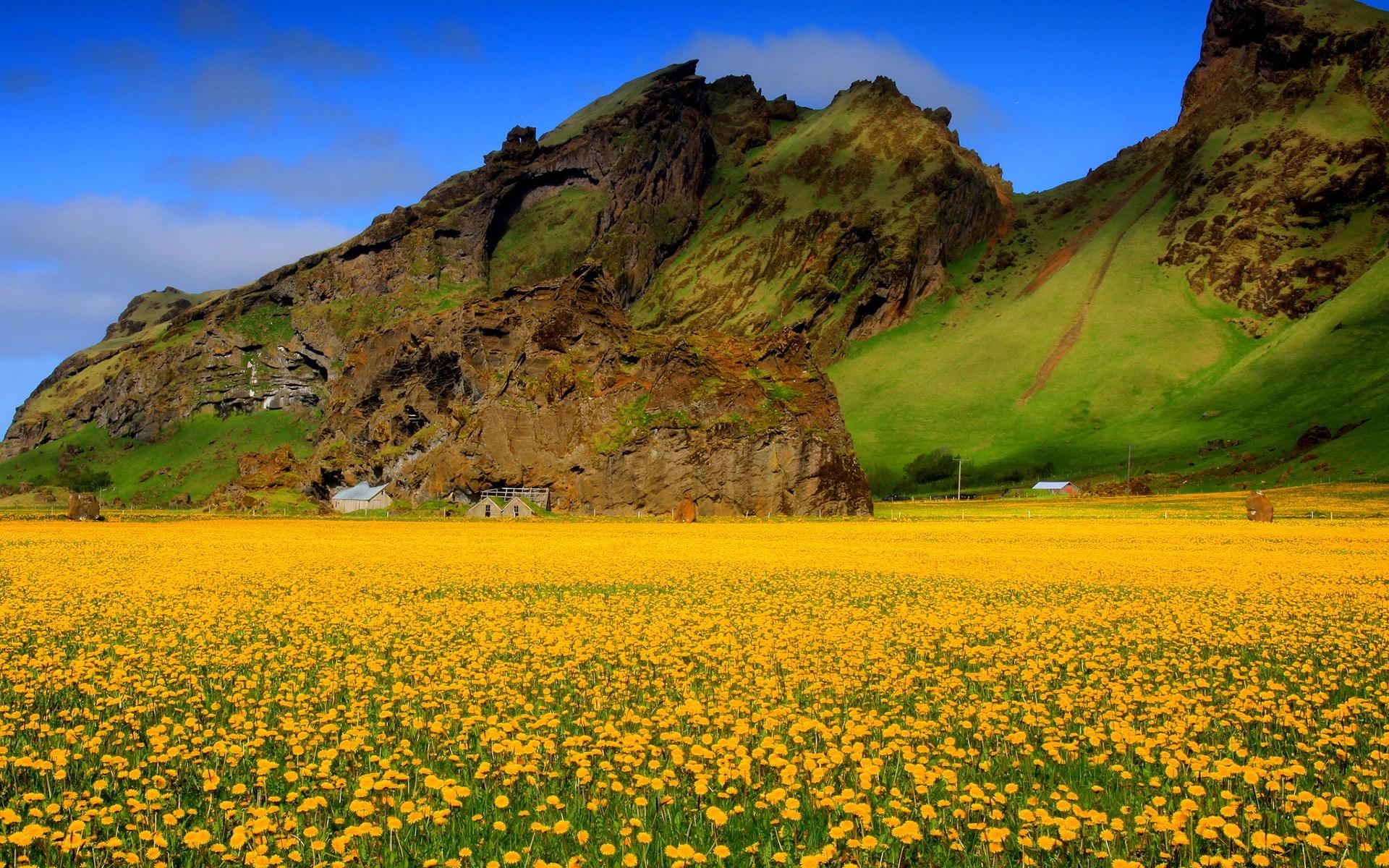 Yellow Flower Field Wallpaper 42771 1920x1200 px ...