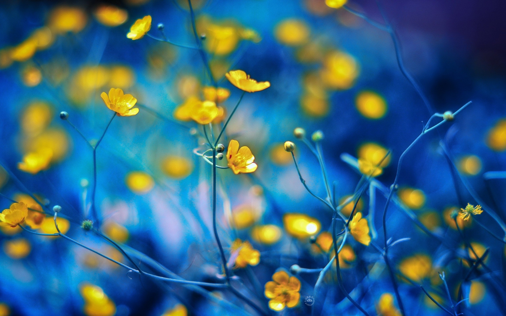 download yellow macro wallpaper 37396 1920x1200 px high definition