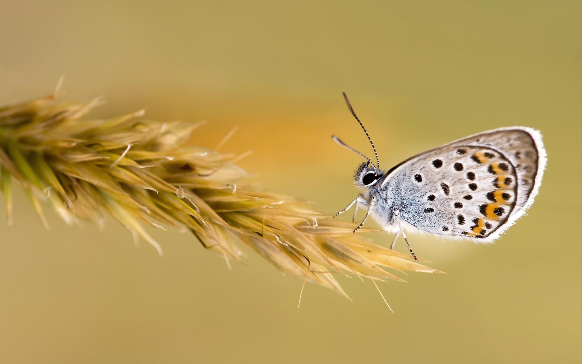 Бабочки растение макро  № 3660408 загрузить