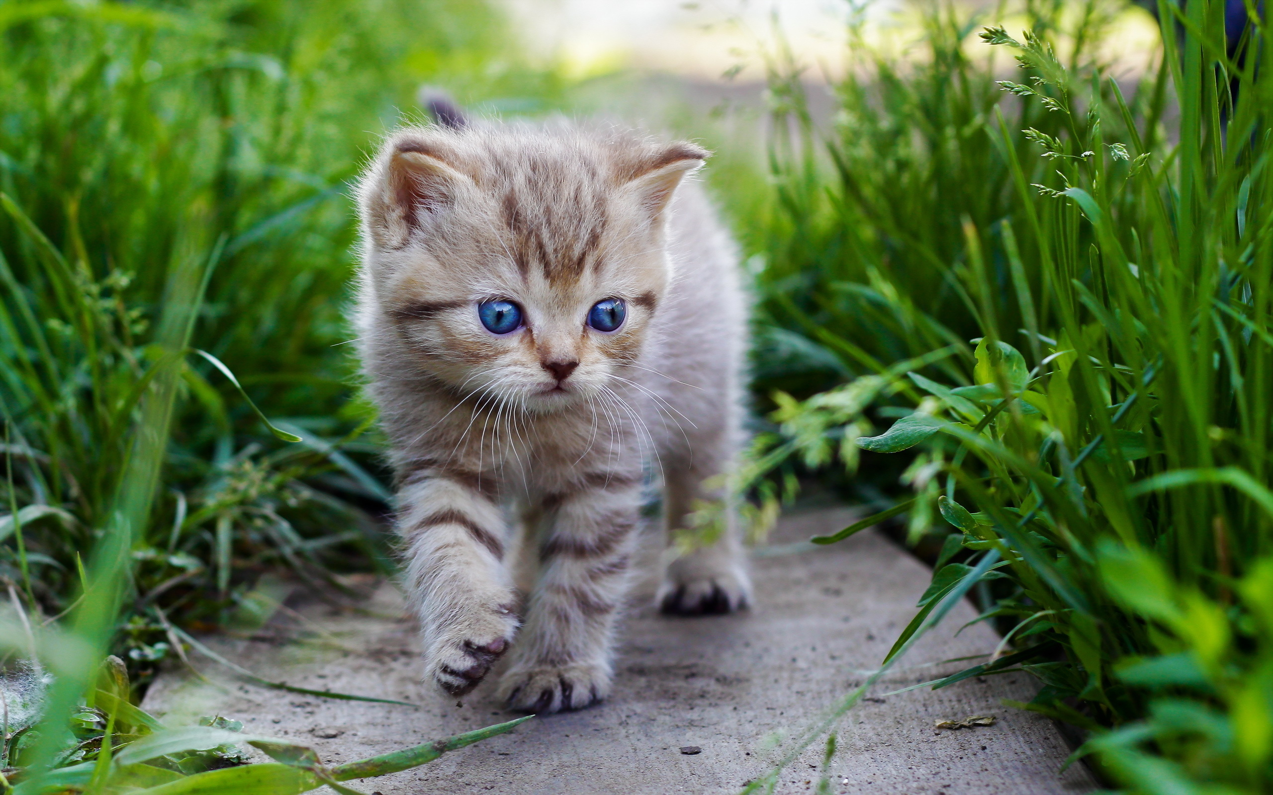 Download Baby Cat px High Resolution Wallpaper