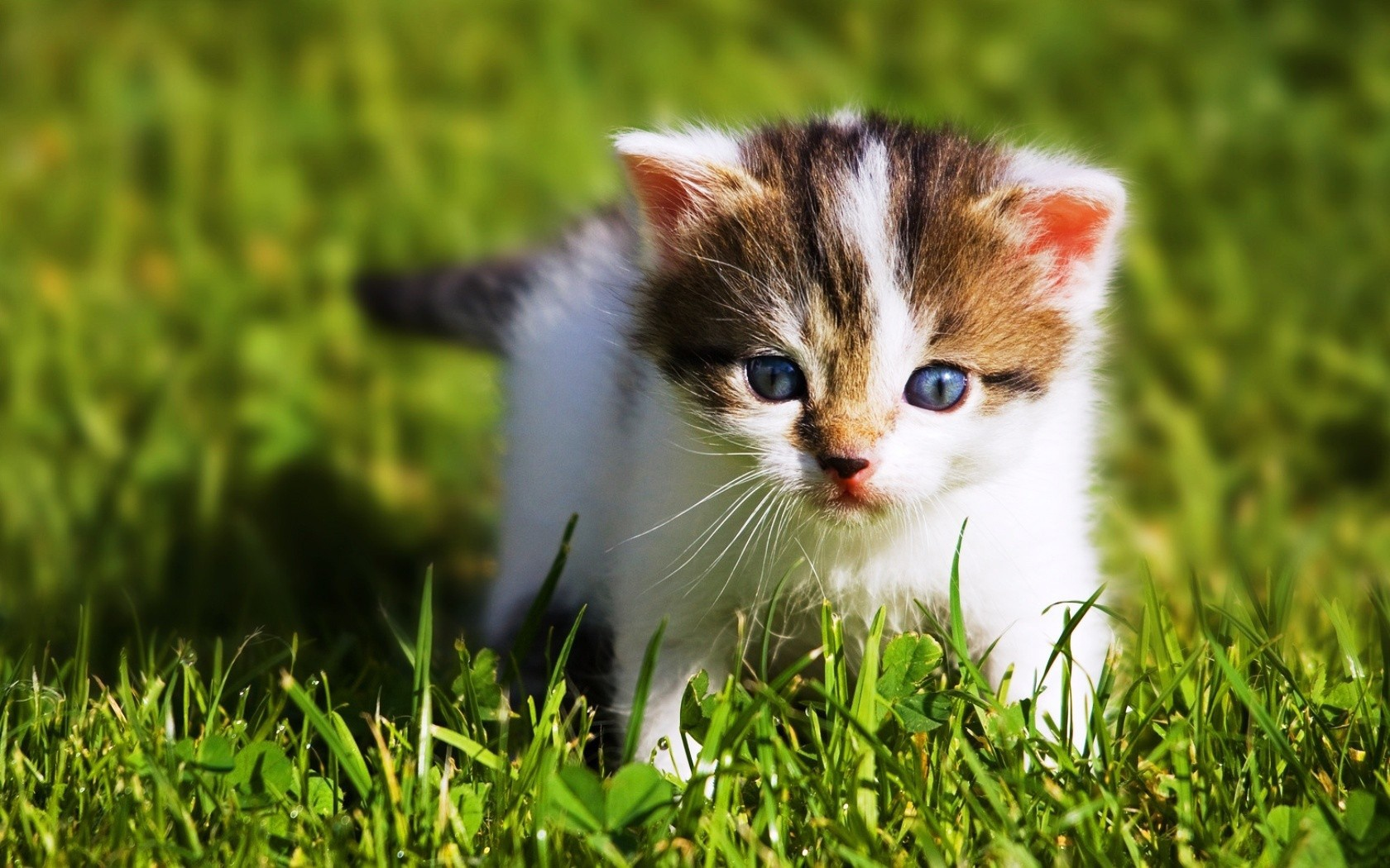 baby cat pictures 30578