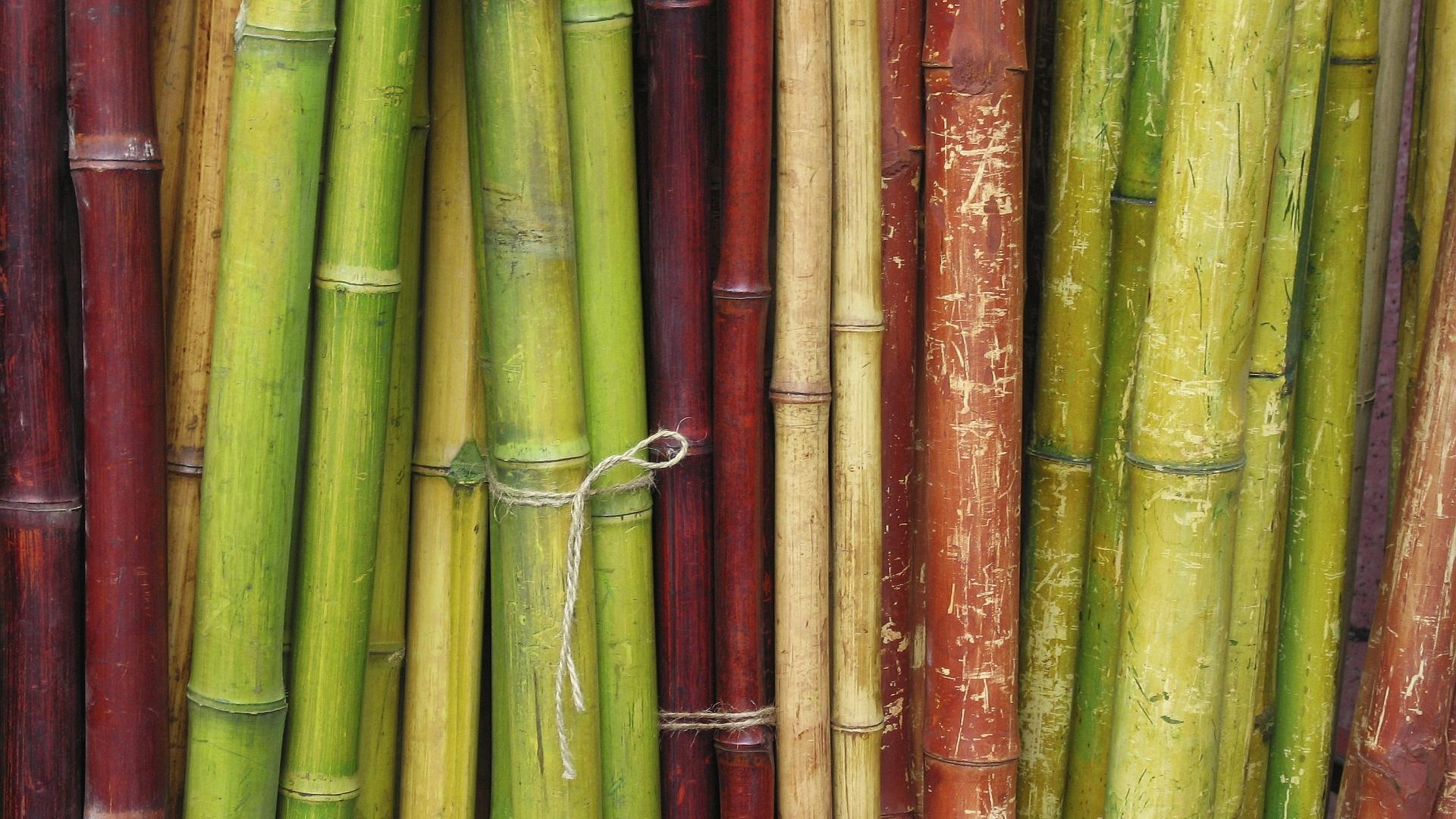 bamboo wallpaper 6505 1920x1080 px