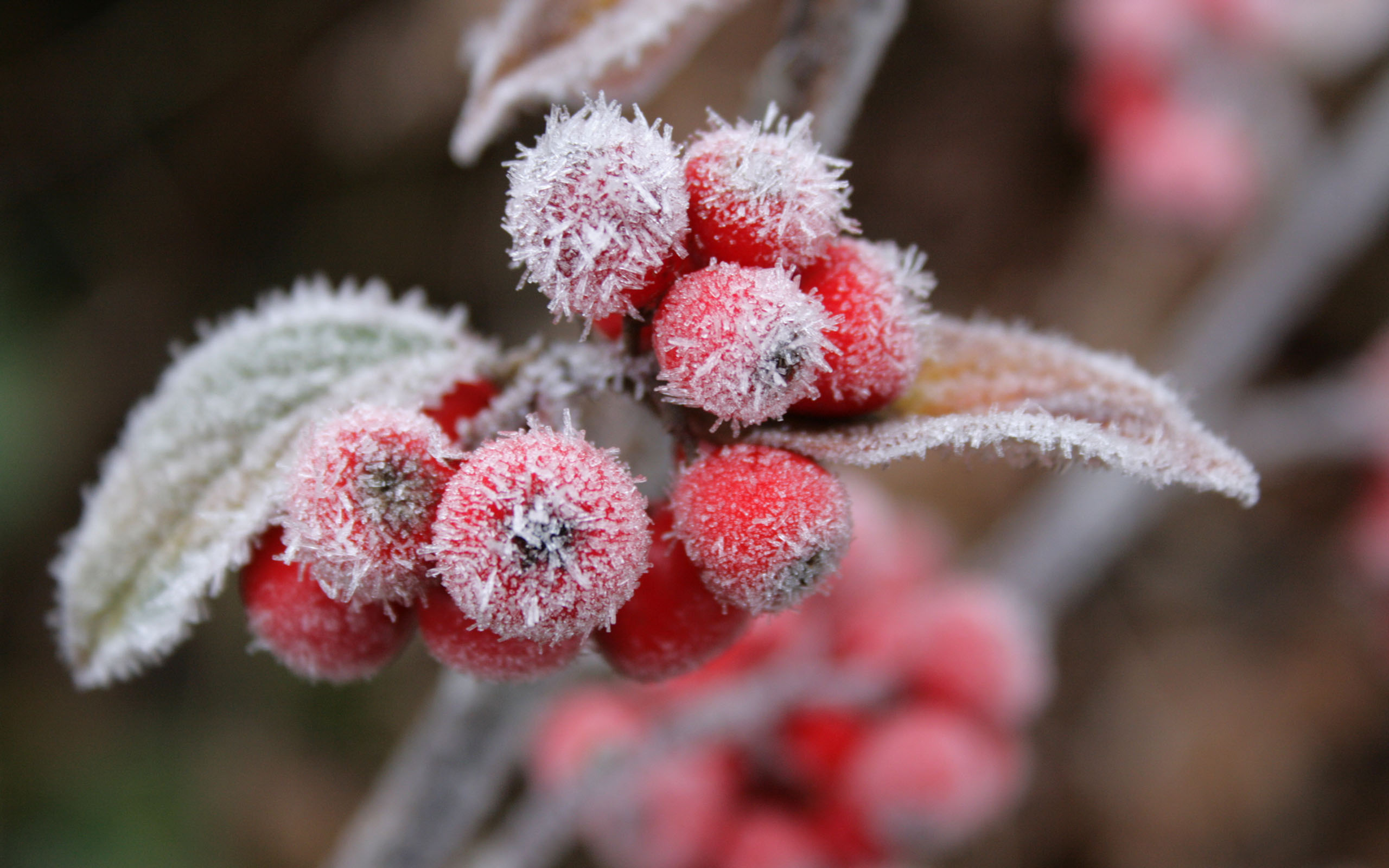 cool frost wallpaper 29710