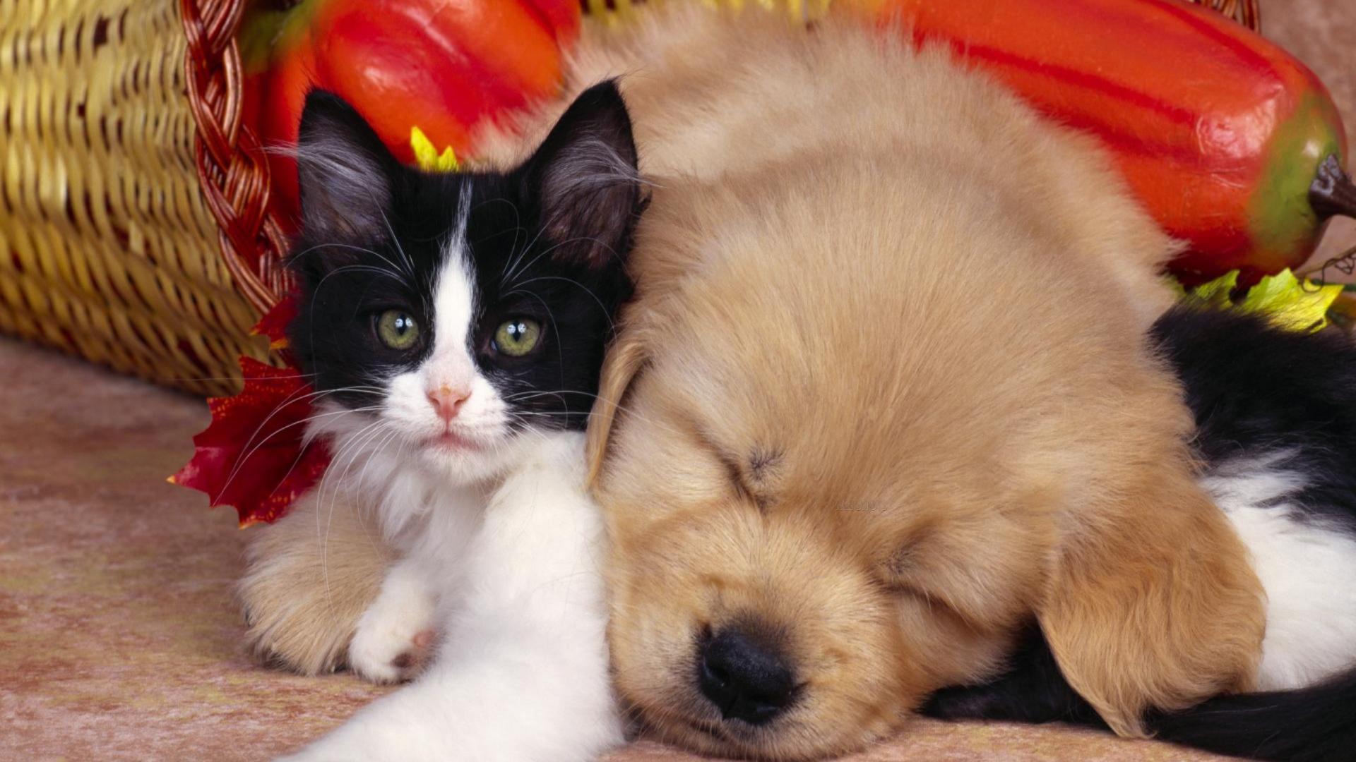 cute pets 20721