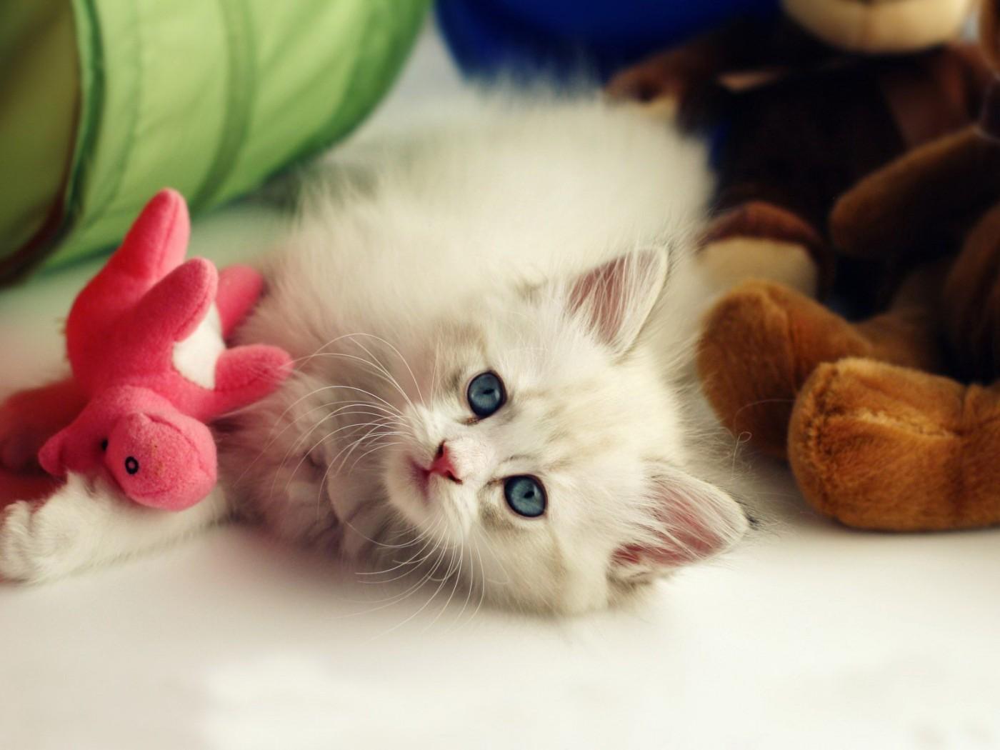 cute pets 20723
