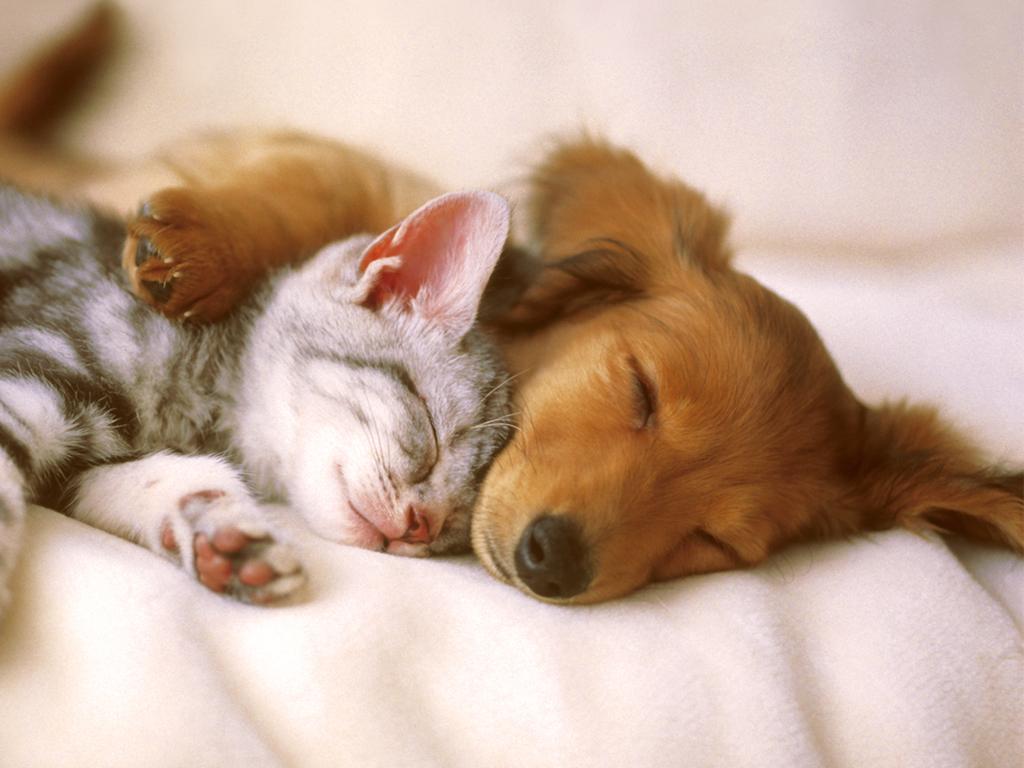 cute pets 20730
