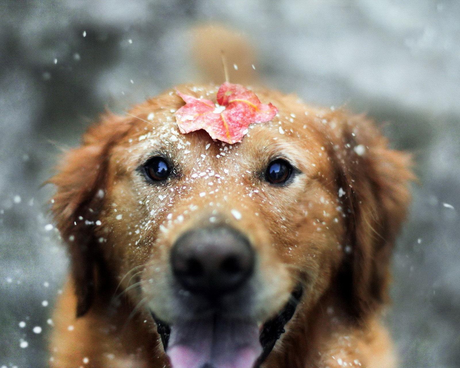 cute pets wallpaper 20727