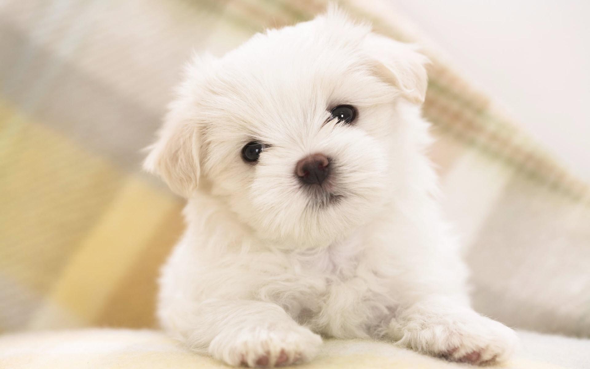 cute pets wallpaper 20731