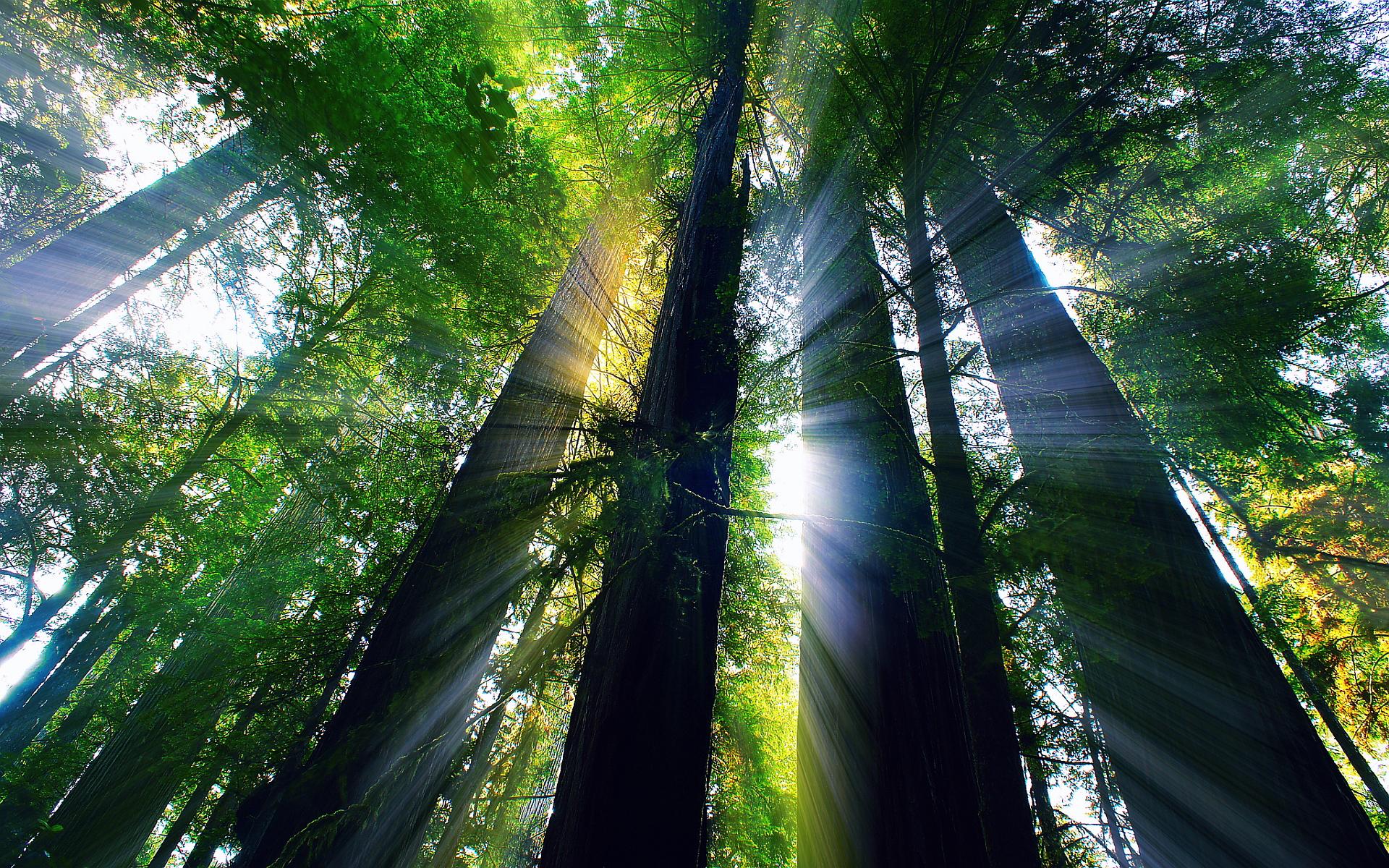 redwood 31340