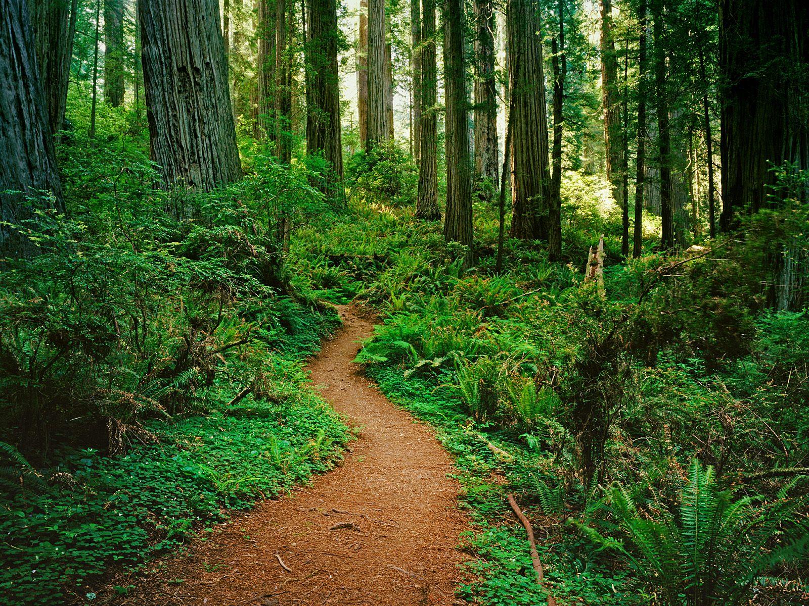 redwood wallpapers 31339