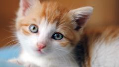 Adorable Baby Cat Wallpaper 30573