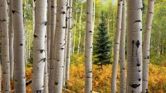 Aspen Wallpaper HD 30462