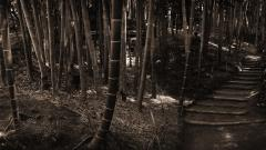 Bamboo Wallpaper 6495