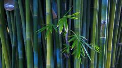 Bamboo Wallpaper 6500